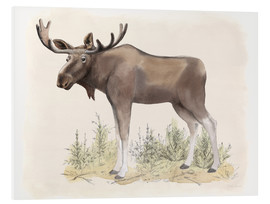 Forex  Wilderness Collection Moose - Beth Grove