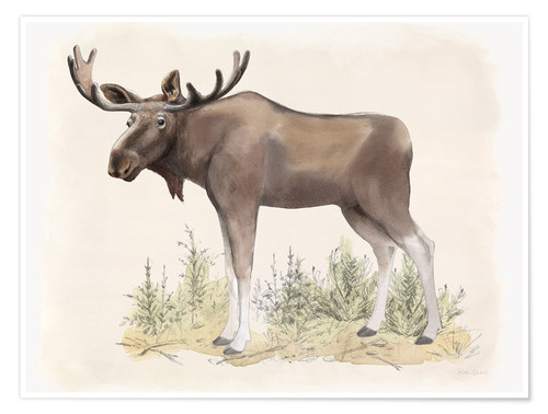 Premium poster Wildlife - moose