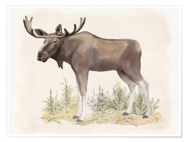 Poster  Wilderness Collection Moose - Beth Grove
