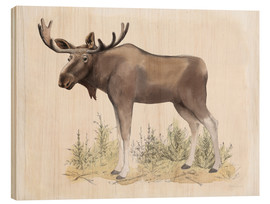 Wood  Wilderness Collection Moose - Beth Grove
