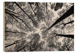 Wood print  Looking Up - Aledanda