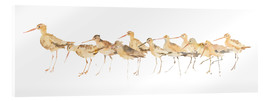 Acrylic print  Watercolor Sandpipers Panel - Avery Tillmon