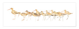 Premium poster Watercolor Sandpipers