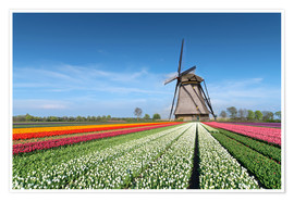 Premium poster Flowers and windmill