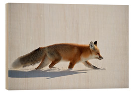 Wood print  Red fox, stalking through the snow - James Hager