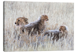 Canvas  Cheetah with cubs