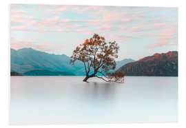 Forex  The wanaka tree - Nicky Price