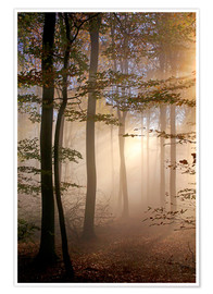 Premium poster Autumn forest in the fog