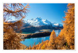 Premium poster Colorful forests around Lake Sils, Switzerland