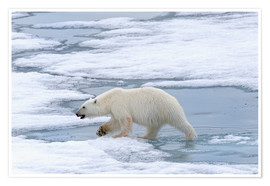 G & M Therin-Weise - Polar bear on the Svalbard Islands