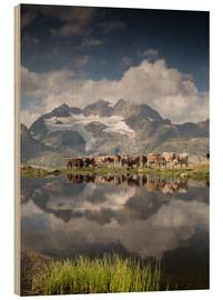 Wood print  Cows graze on alpine lake - Roberto Moiola