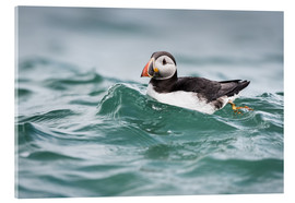 Matthew Cattell - Puffin riding a small wave