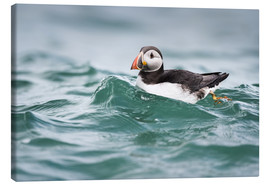 Canvas  Puffin riding a small wave - Matthew Cattell