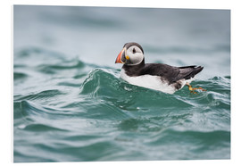 Foam board print  Puffin riding a small wave - Matthew Cattell