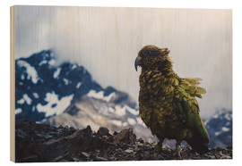 Wood print  Kea at Avalanche Peak, New Zealand - Nicky Price