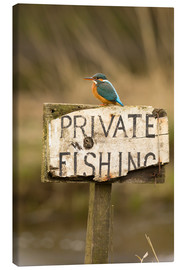 Canvas print  Kingfisher rests on a fishing sign - John Potter