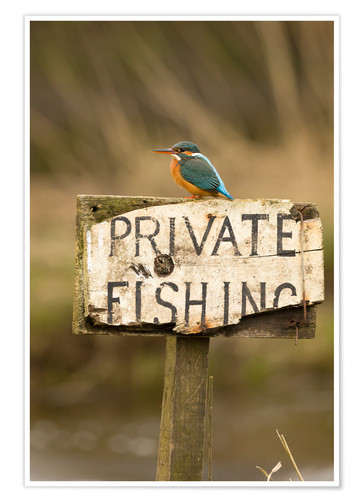 Poster Kingfisher rests on a fishing sign