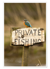 Premium poster Kingfisher rests on a fishing sign