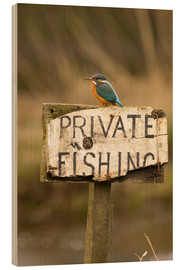 Wood print  Kingfisher rests on a fishing sign - John Potter