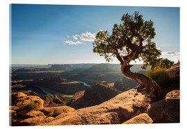 Acrylic print  Dead Horse Point off the Colorado Canyon, Utah - Francesco Vaninetti