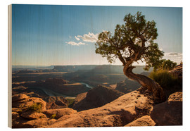 Wood print  Dead Horse Point off the Colorado Canyon, Utah - Francesco Vaninetti