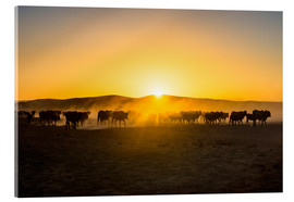 Acrylic glass  Backlight of cattle on the way home at sunset - Michael Runkel