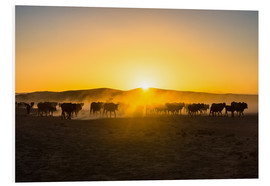 Foam board print  Backlight of cattle on the way home at sunset - Michael Runkel