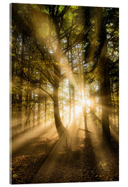 Acrylic glass  Sunbeams in autumn forest - Lee Frost