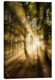 Canvas print  Sunbeams in autumn forest - Lee Frost