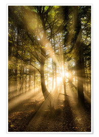 Premium poster Sunbeams in autumn forest