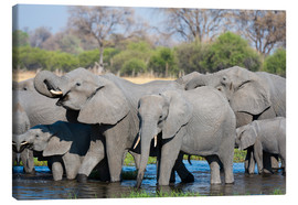 Canvas print  African elephants in a herd - Sergio Pitamitz
