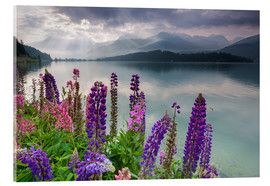 Acrylic print  Multi colored lupins frame the calm water of Lake Sils - Roberto Moiola