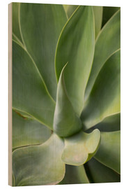 Wood print  Detail of an agave plant - Martin Child