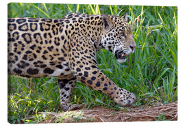 Canvas  Young Jaguar at a riverside - G & M Therin-Weise