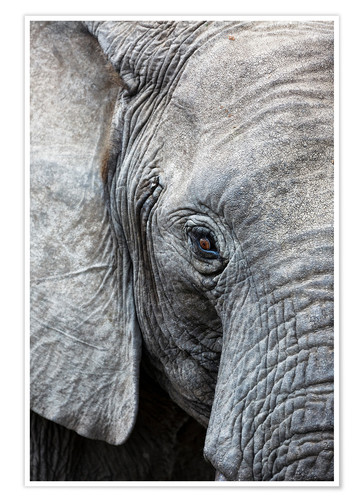 Premium poster Eye of the African elephant
