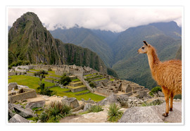 Premium poster  Lama looks at Machu Picchu - Don Mammoser