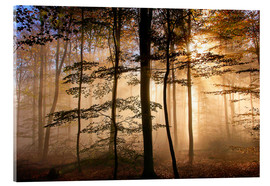 Acrylic print  Sunbeams In the foggy forest - Hans-Peter Merten