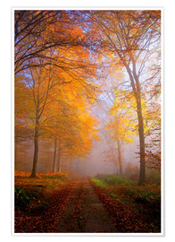 Premium poster Autumnal forest near Kastel Staadt