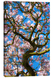 Canvas print  Magnolia tree in bloom - Billy Stock