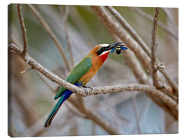 Canvas print  Bee-eater - James Hager