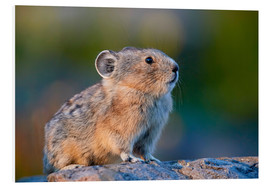 Forex  American pika - James Hager