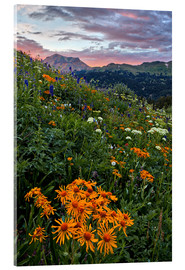 Acrylic print  Alpine meadow with orange sun bride - James Hager