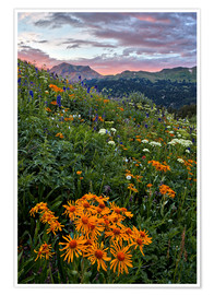 Premium poster Alpine meadow with orange sun bride