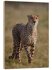 Wood print  Watchful cheetah - James Hager