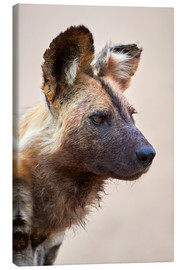 Canvas  African wild dog - James Hager