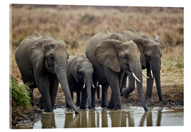 Acrylic print  Elephants at the waterhole - James Hager