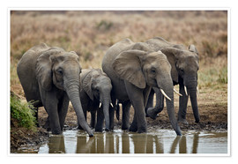 Premium poster Elephants at the waterhole