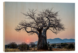 Wood print  Baobab tree at sunrise - James Hager