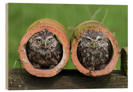 Wood print  Little owls - Ann & Steve Toon