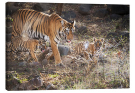 Canvas print  Tiger family - Janette Hill